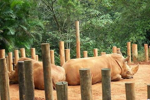 Animais de grande e pequeno porte são encontrados no Zoológico de São Paulo. Imagem: Arquivo Jeguiando)