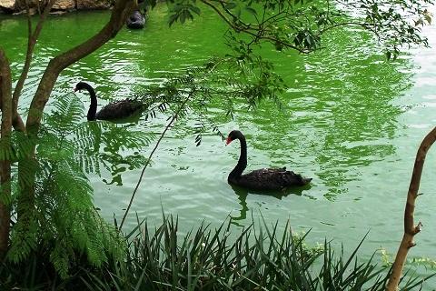 Laguinho formado pelas águas do Riacho Ipiranga. Zoológico de São Paulo. Imagem: Arquivo Jeguiando