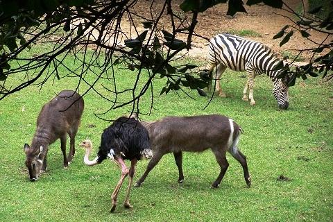 Animais soltos no Zoo Safari. Imagem: Janaína Calaça