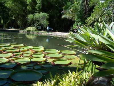 Vitória-Régia. Jardim Botânico. Rio de Janeiro. Imagem: Jeguiando.