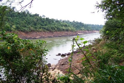 Vegetação. Cataratas Brasileiras. Foz do Iguaçu. Imagem: Erik Pzado.