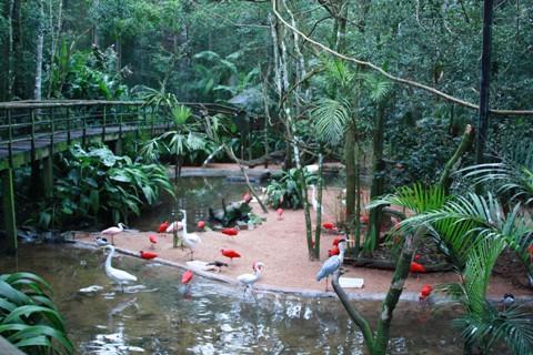 Parque das Aves. Foz do Iguaçu. Imagem: Erik Pzado.
