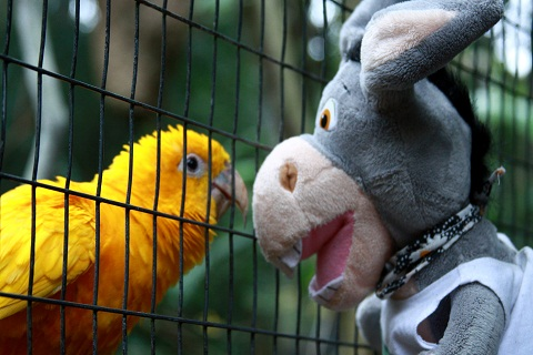 Jegueton confraternizando com seu (sua) novo (a) amiguinho (a)  plumado (a). Imagem: Erik Pzado.