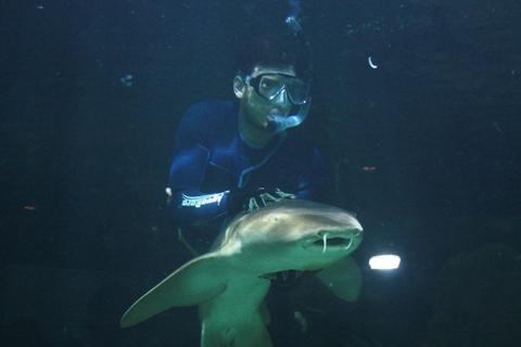 Nadando com os tubarões. Imagem: Erik Pzado.