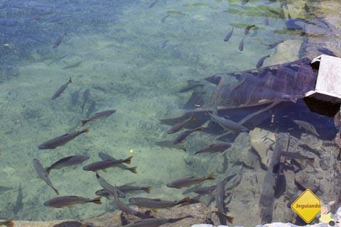 Peixes nas águas cristalinas do Rio Formoso. Balneário Municipal de Bonito. Imagem: Erik Pzado.