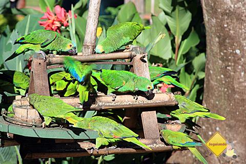 Fauna e flora se reúnem na Estância do Rio da Prata. Imagem: Erik Pzado.