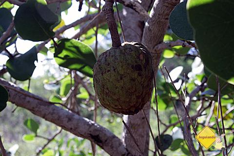 Frutas encontradas ao longo da trilha. Imagem: Erik Pzado.