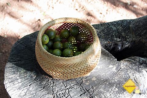 Frutas do cerrado. Imagem: Erik Pzado.