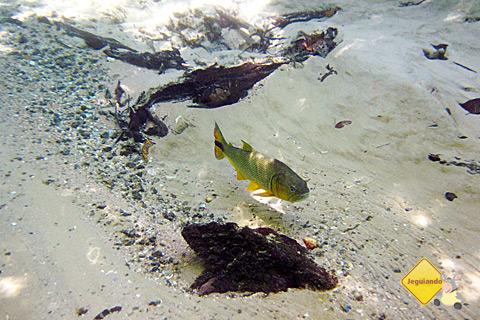 Águas cristalinas, peixes coloridos e os olhos de quem vê tudo isso de perto encantados. Imagem: Erik Pzado.