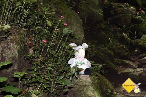 """Jegueton ou """"e eu vejo flores em você""""! Imagem: Erik Pzado"""