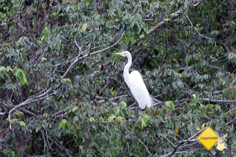Aves que habitam a Estância Mimosa. Bonito, Mato Grosso do Sul. Imagem: Erik Pzado.