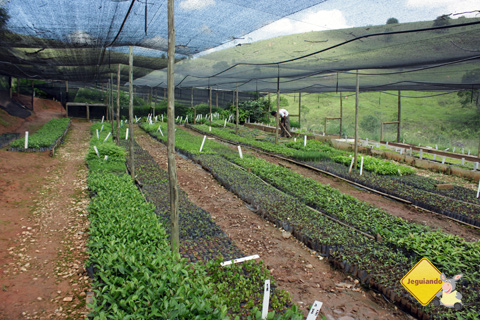 Local de plantio das mudas para reflorestamento e de hortaliças. Imagem: Erik Pzado.