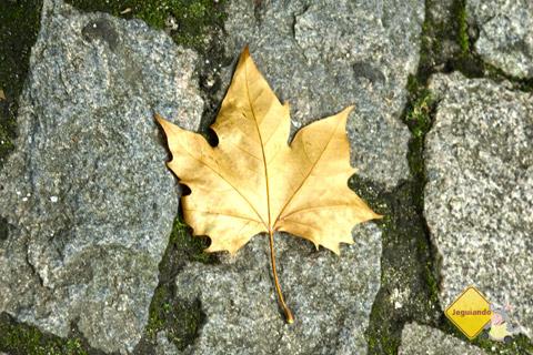 Outono dourado. Imagem: Erik Pzado.