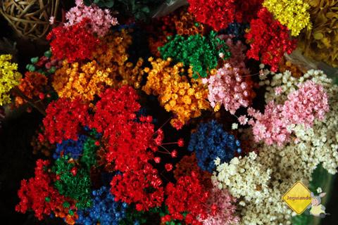 Colorido. Centro de Abastecimento do Rio Vermelho. Salvador, Bahia. Imagem: Erik Pzado