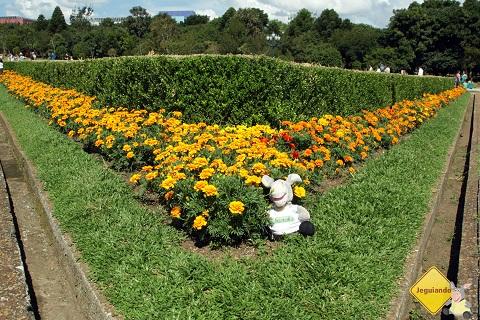 Jegueton no meio das florzinhas! Imagem: Erik Pzado