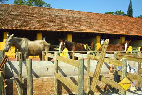 Cavalos. Santa Clara Eco Resort, Dourado, SP. Imagem: Erik Pzado.