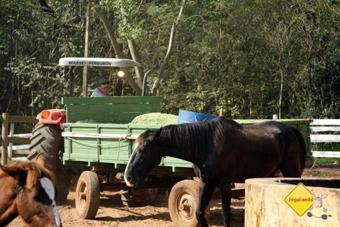 Trabalho na fazenda. Santa Clara Eco Resort, Dourado, SP. Imagem: Erik Pzado.