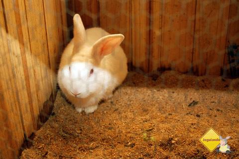 Coelhinho da páscoa que trouxes para mim? Santa Clara Eco Resort, Dourado, SP. Imagem: Erik Pzado.