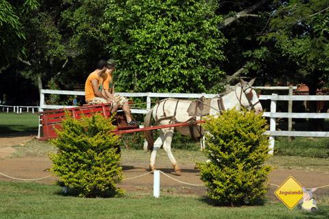 Rumbora passeá? Trabalho na fazenda. Santa Clara Eco Resort, Dourado, SP. Imagem: Erik Pzado.