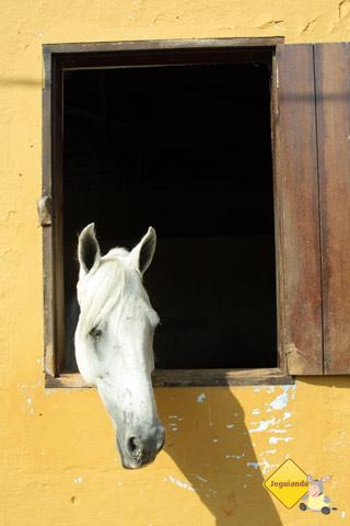 Cavalo tomando um sol! Santa Clara Eco Resort, Dourado, SP. Imagem: Erik Pzado.