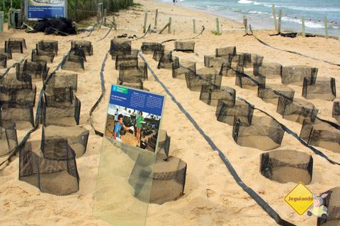 Ninhos. Projeto TAMAR, Praia do Forte, Litoral Norte da Bahia. Imagem: Erik Pzado
