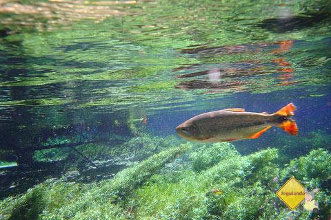 As águas cristalinas do Rio da Prata ficam ainda mais cristalinas no inverno. Jardim, MS. Imagem: Erik Pzado