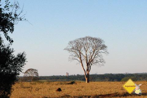 O cerrado, aos poucos, aparece na estrada. De Campo Grande a Bonito. Imagem: Erik Pzado