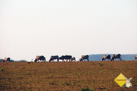 Animais são avistados ao longe. De Campo Grande a Bonito. Imagem: Erik Pzado