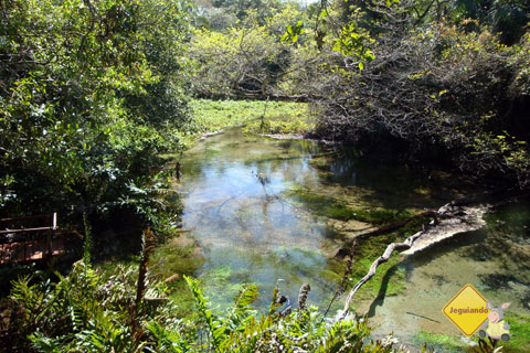 Durante a trilha para o Rio Sucuri, Bonito, MS. Imagem: Erik Pzado