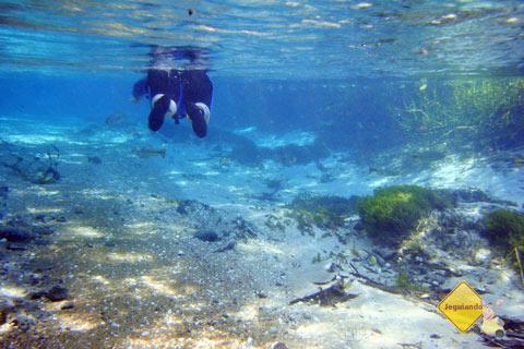 Flutuando no azul. Imagem: Erik Pzado
