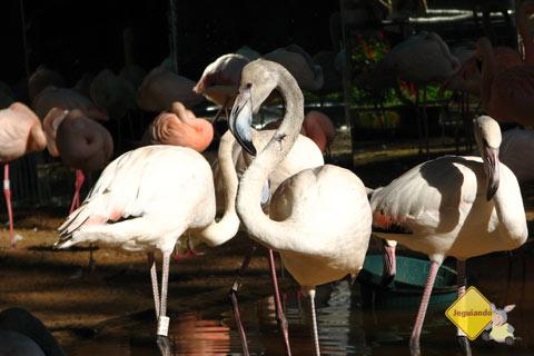 Parque das Aves, Foz do Iguaçu, PR. Imagem: Janaína Calaça