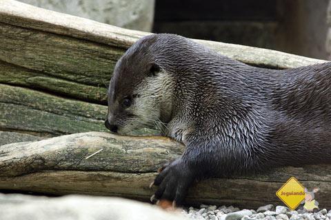 Soninho e preguiça! Biodome de Montreal, Canadá. Imagem: Erik Pzado