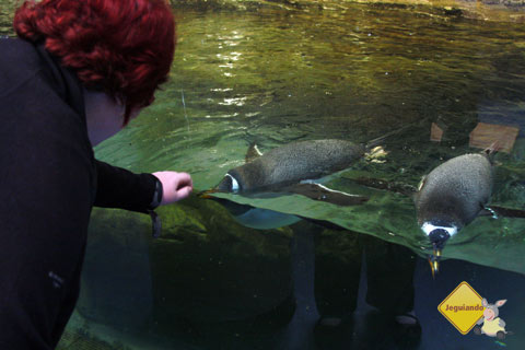 Pinguins interativos! Biodome de Montreal, Canadá. Imagem: Erik Pzado