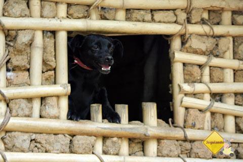 Pretinha, a mascote do Parque Ecológico do Monjolinho, Socorro, SP. Imagem: Erik Pzado