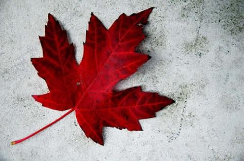 Explore o Canadá!