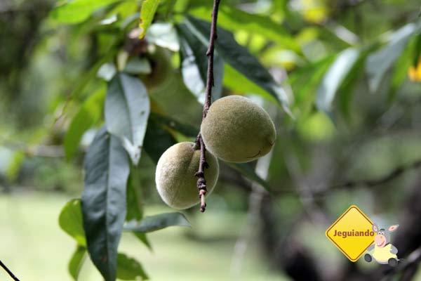 Frutas colhidas do pé são utilizadas nas preparações servidas na pousada. Imagem: Erik Pzado