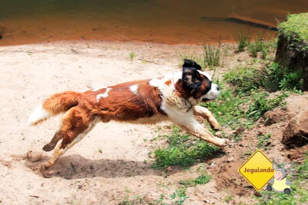 Dino tomando banho no rio. Imagem: Erik Pzado