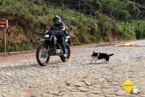 Cachorrinha acompanha os visitantes, mas corre atrás dos habitantes. Causos de Bichinho, MG. Imagem: Erik Pzado