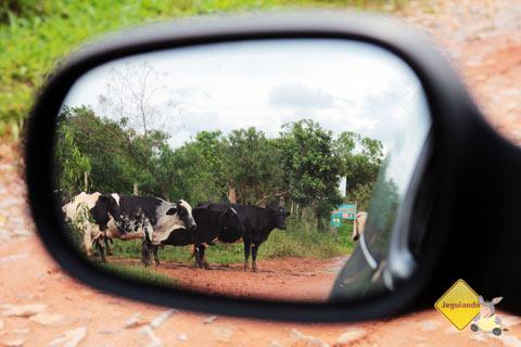 Mu. Bichinho, Minas Gerais. Imagem: Erik Pzado