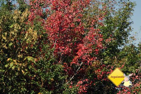 Mudança das cores no outono. Eastern Townships, Canadá. Imagem: Erik Pzado