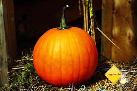 Chegada do outono. Mont Sutton, Eastern Townships, Canadá. Imagem: Erik Pzado