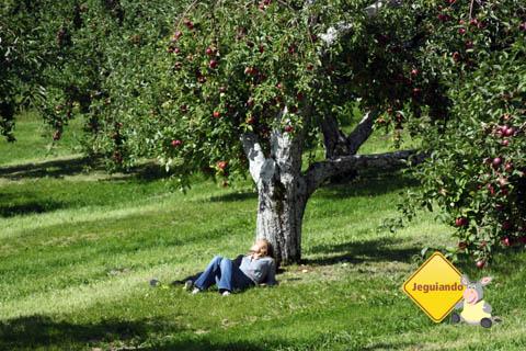 Visitante aproveitando a sombra da macieira. Domaine Pinnacle, sidreria em Eastern Townships, Canadá. Imagem: Erik Pzado