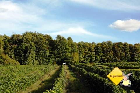 Vinícola Domaine des Côtes d'Ardoise, Eastern Townships, Canadá. Imagem: Erik Pzado