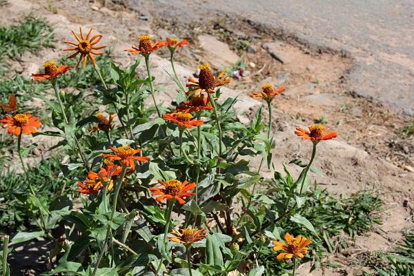 Flores. Imagem: Janaína Calaça