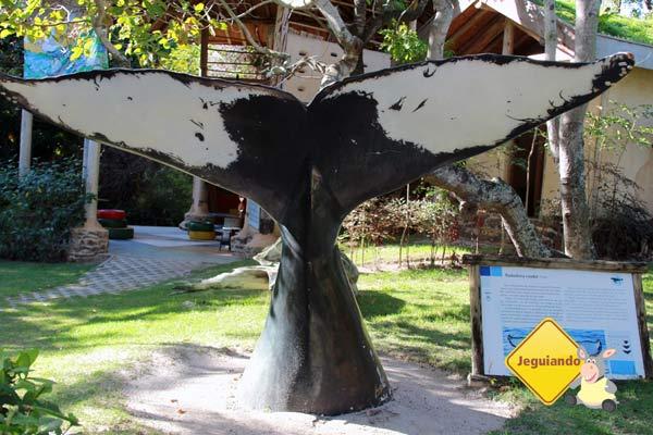 Posição de cauda. Projeto Baleia Jubarte, Praia do Forte, Bahia. Imagem: Erik Pzado
