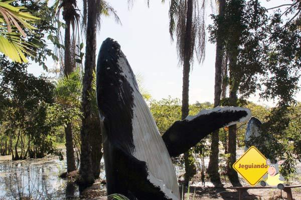Instituto Baleia Jubarte, Praia do Forte, BA. Imagem: Erik Pzado