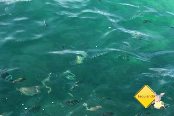 Peixes e águas cristalinas. Imagem: Erik Pzado
