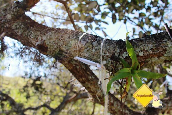 Árvore dos desejos. Canto da Floresta Eco Resort, Amparo, SP. Imagem: Erik Pzado