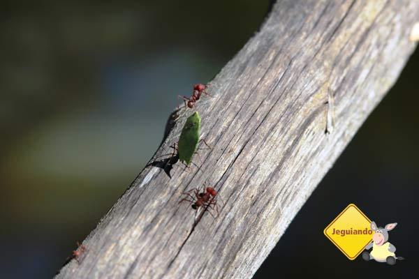 Formiguinhas. Canto da Floresta Eco Resort, Amparo, SP. Imagem: Erik Pzado