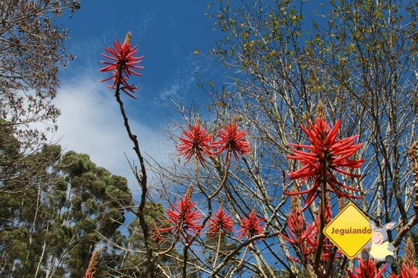 Natureza. Canto da Floresta Eco Resort, Amparo, SP. Imagem: Erik Pzado